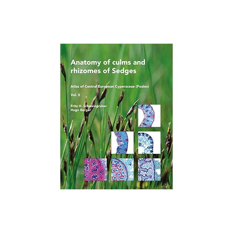 Anatomy of culms and rhizomes of sedges.